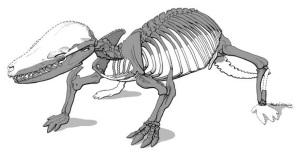 Fruitafossor, a mole-like Mesozoic mammal