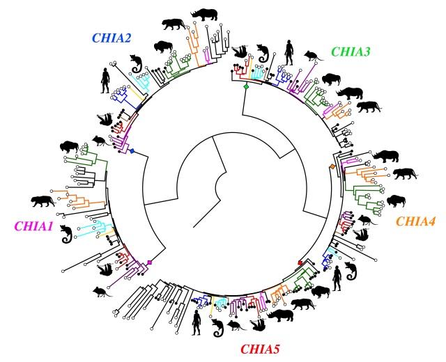 Chitinase gene family